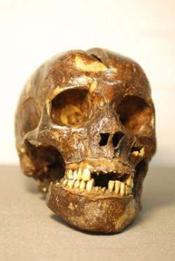 The Skull of Mary Ann Higgins, © Herbert Art Gallery & Museum